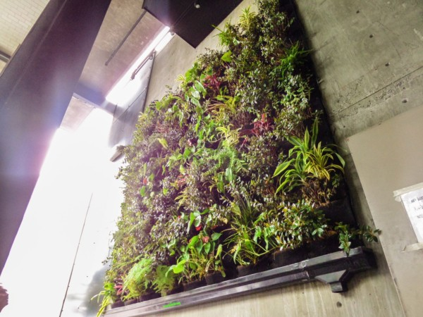Green Walls Design – UnderBelly