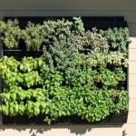 Herb Vertical Garden – WallsSpoon