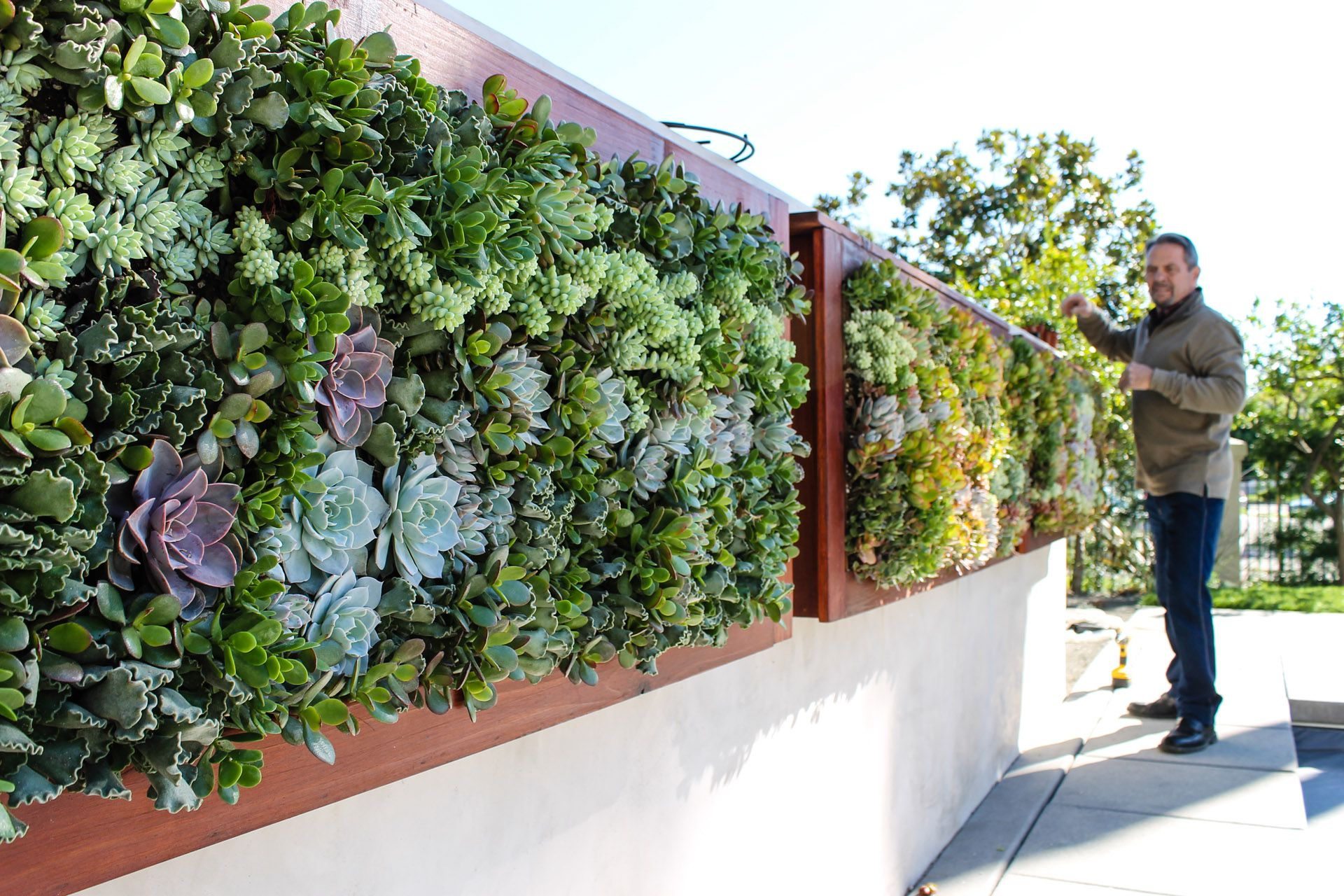 Living walls truevert vertical garden solutions san diego for Garden design solutions