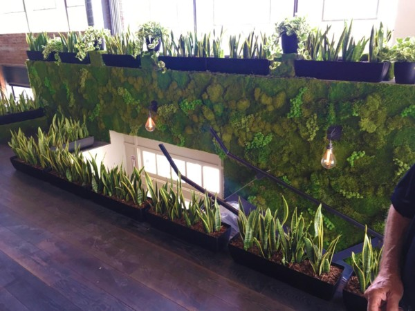 Custom troughs and Wall Moss – Underground Elephant