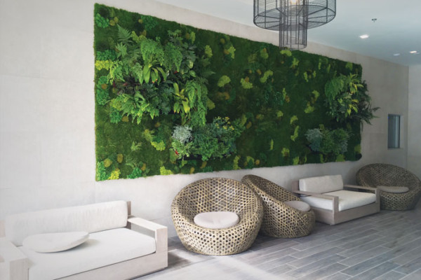 Living Wall and Preserved Moss