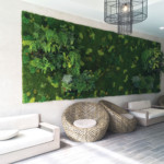 Stunning 15' x 7', Living Wall