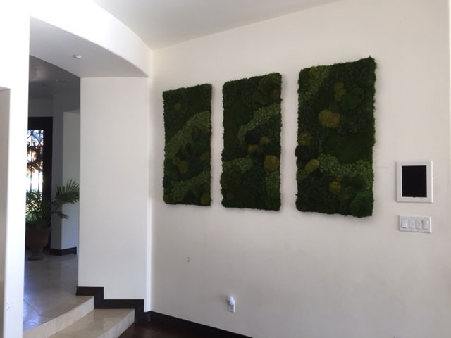 Residential Living Walls made of preserved moss