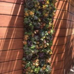 Residential Living Wall made of Succulent Plants, La Jolla California
