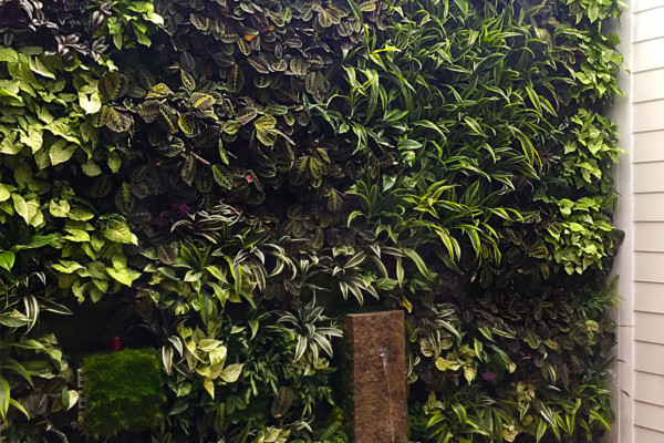 residential living wall Los Angels