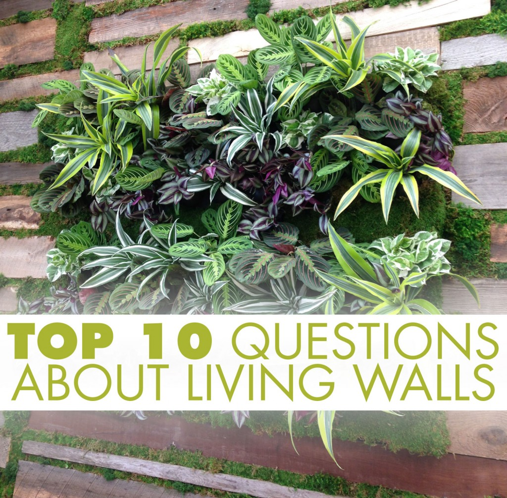 High Quality Top 10 Questions About Living Walls
