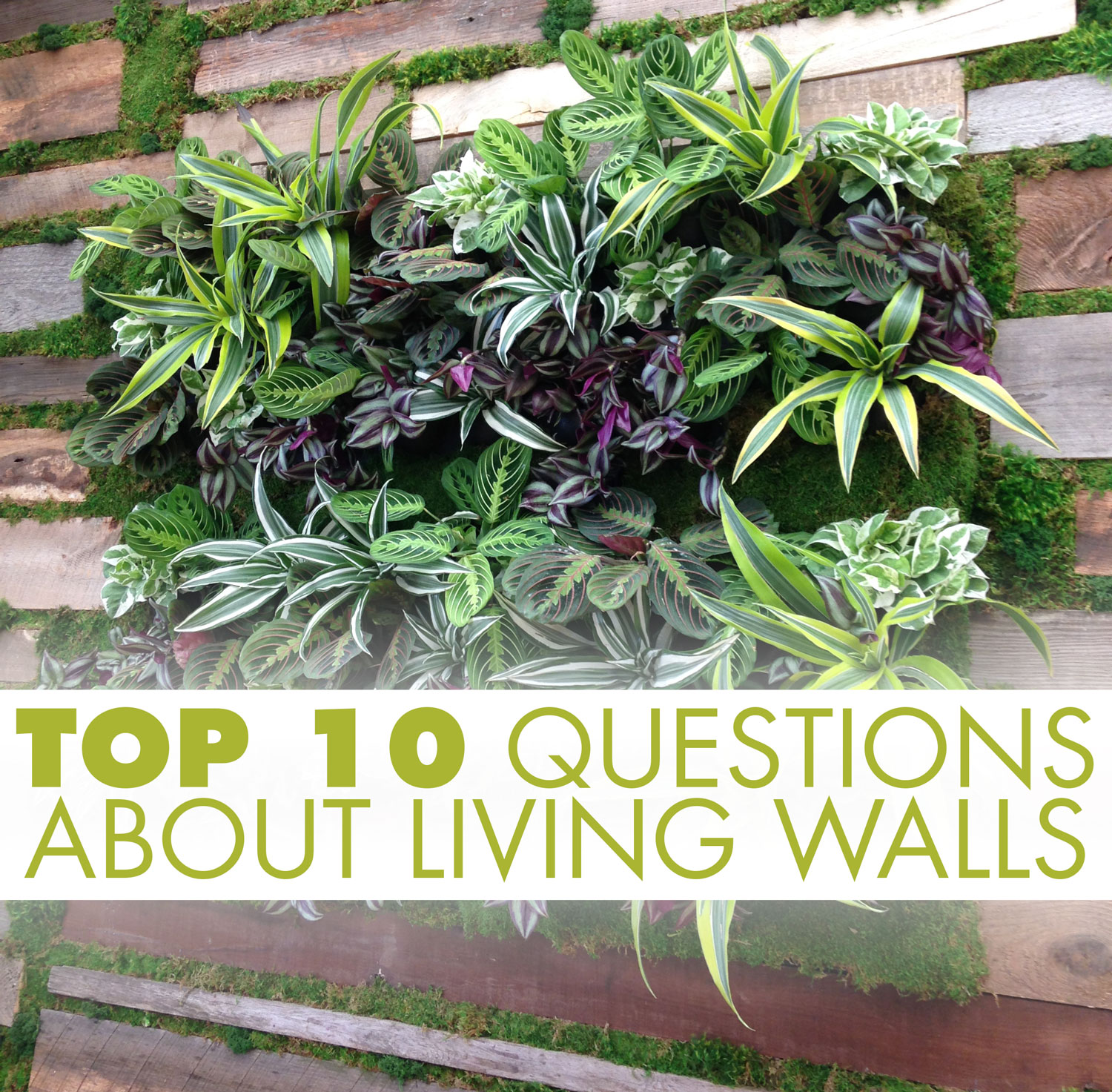 Top 10 questions about Living Walls