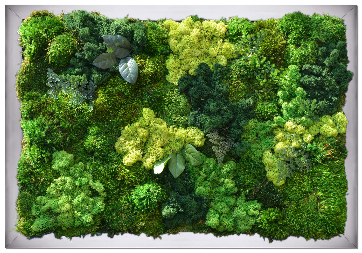 Moss Art Final Size 2u0027x3u2032 $600. Shipping is not included. Order Now » : wall framed art - www.pureclipart.com