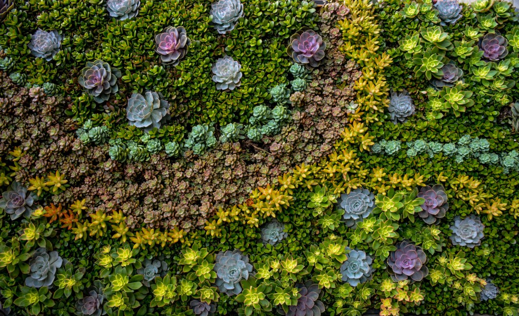 Stunning Succulent Living Wall Design