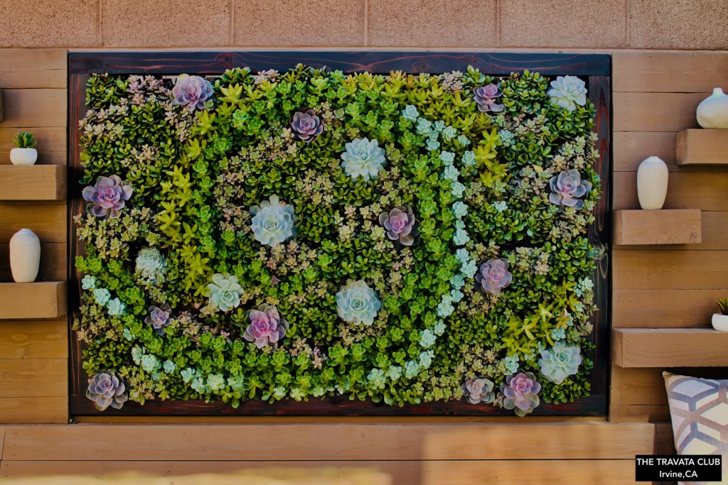 Succulent Living Wall