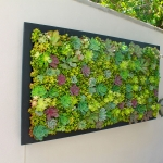 Beautiful Living Wall Design – San Diego