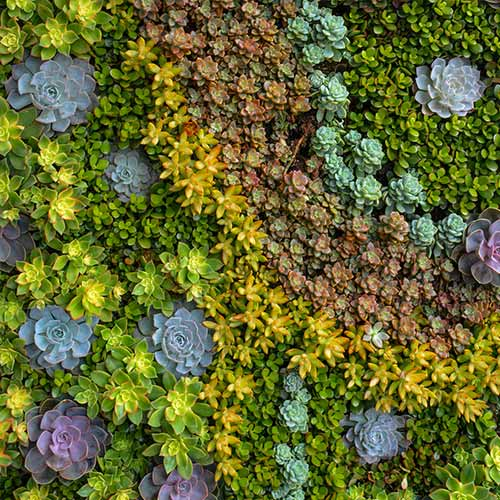 Living Walls Vertical Garden Design And Installation Truevert
