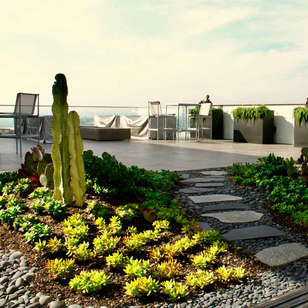 Drought Resistant Landscaping Services