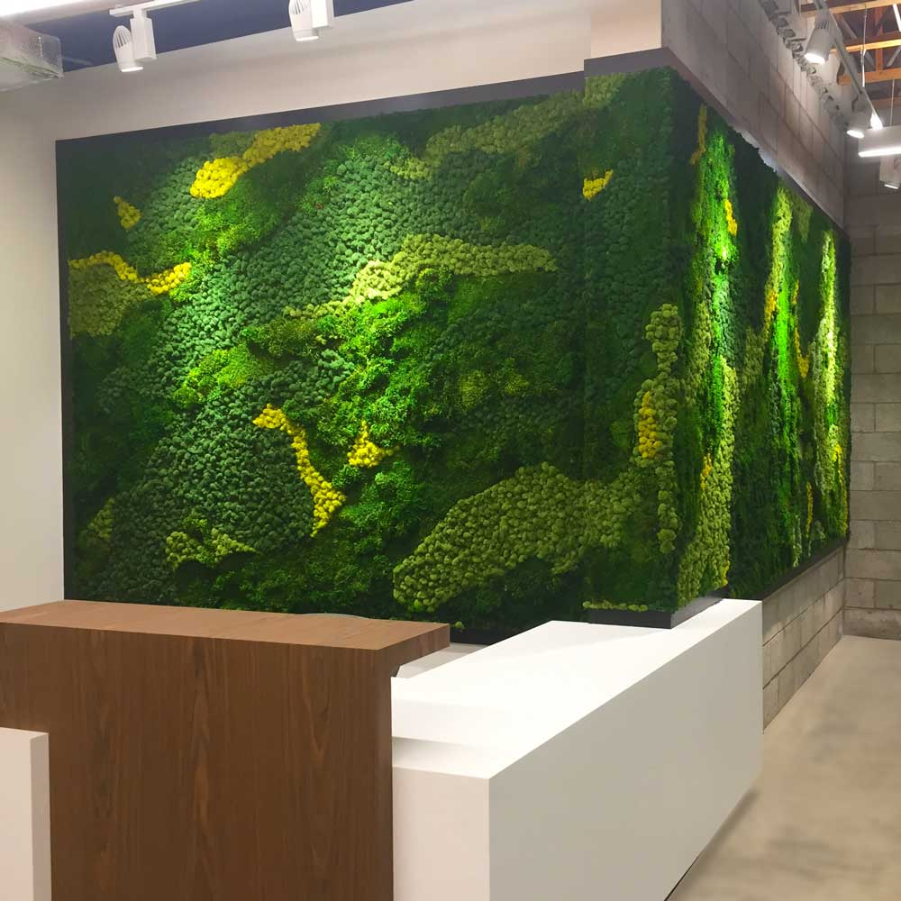 Moss Walls Services